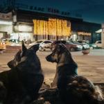 Space Dogs i Orfeja u Kinoteci, ostatak programa online